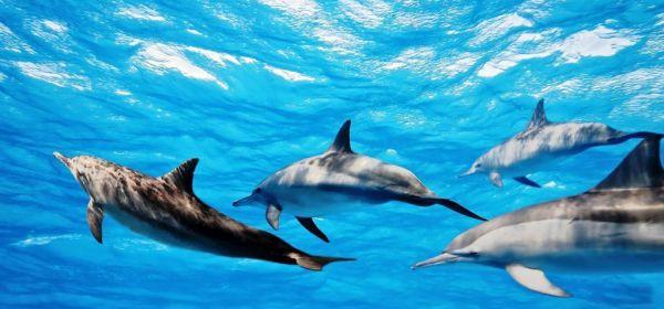 Перевод с языка дельфинов скоро станет возможным